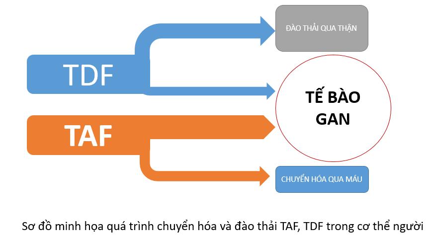 So sánh TAF và TDF